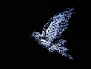 smoke flying dove isolated on black