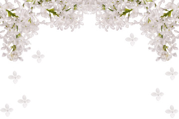 isolated white lilac flower half frame