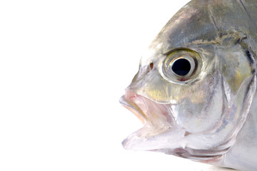 detail of head of red fish