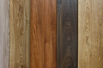 Different species of wood, different textures and colors Wall mural