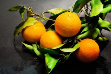 fresh orange branch from orange tree