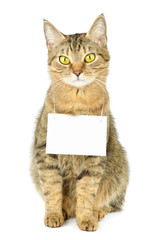 Cardboard hang on neck of cat