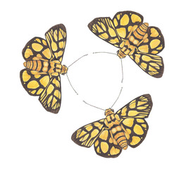 butterfly dancing no.4