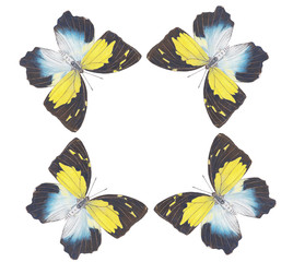 butterfly dancing no.2