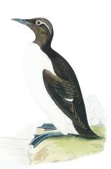 bird old illustration