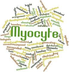 Word cloud for Myocyte