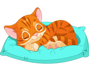 Printed kitchen splashbacks Cats Sleeping kitten