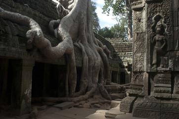Templos de Angkor. Ta Prohm. Camboya