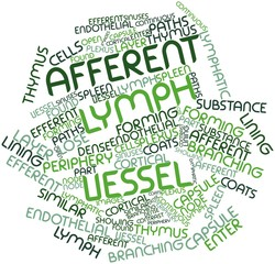 Word cloud for Afferent lymph vessel