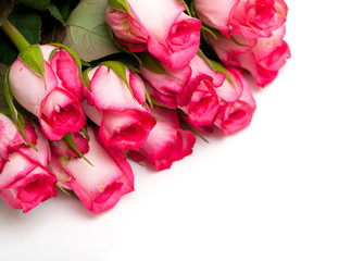 pink roses and empty space for your text
