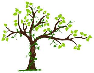Tree with liana and vine