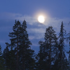 In de dag Volle maan Full moon shining over forest