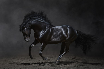 Fototapete - Galloping black horse on dark background