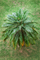 palm on the grass