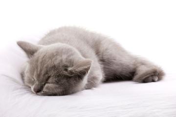 blue cat sleeping