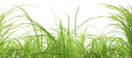 Photos illustrations et vid os de brin d 39 herbe for Haute herbe pokemon