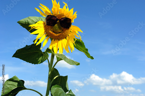 b17b684018 Nice sunflower