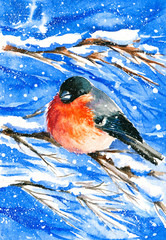 Bullfinch in winter.Watercolors.