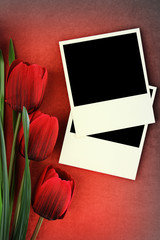 Polaroid frame and tulips on vintage background