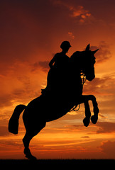 Printed kitchen splashbacks Panther silhouette of a rider on a jumping horse