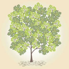 Tree with green leafage. Vector