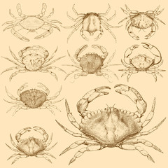 Set of 9 vintage engraved crabs