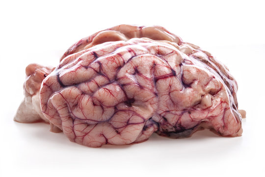 The sheep's brain isolated on white background