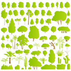 Nature tree, bush, scrub, palm and cactus plants detailed forest