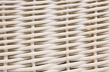 Wiklina biała