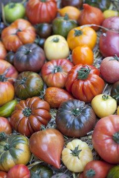 tomates variétés ancienne