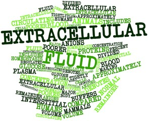 Word cloud for Extracellular fluid