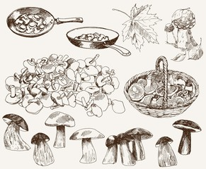 gifts of nature: mushrooms