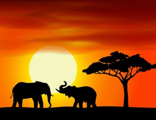 Africa landscape background with elephant