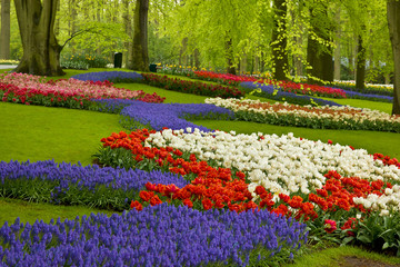 Obraz spring flowers in holland garden - fototapety do salonu