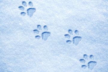 cat paw tracks on the snow