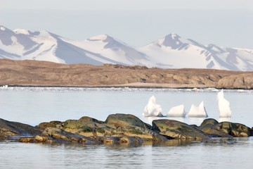 Arctic summer landscape - Spitsbergen, Svalbard