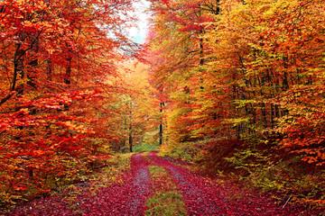 Wall Mural - Farbenprächtiger Herbstwaldweg im Oktober