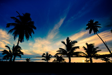 Tropical sunset in the warm summer light