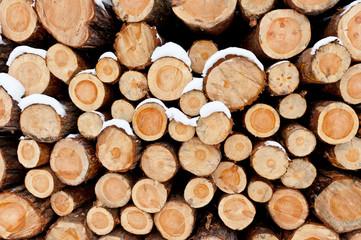 Fototapeta Stos ściętych drzew obraz
