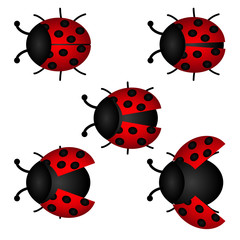 set of Ladybird, vector