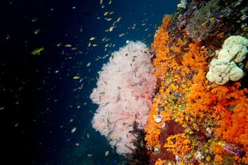 Colorful underwater reef of Raja Ampat Papua, Indonesia