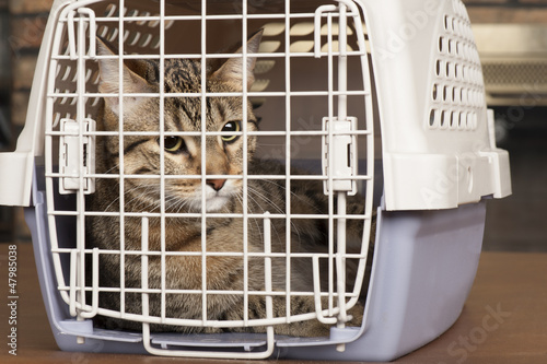 Kittens in a cage cast