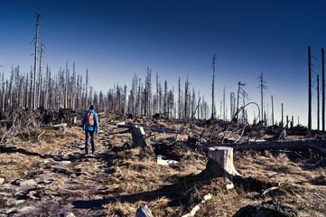 Wanderer in toter Baumlandschaft