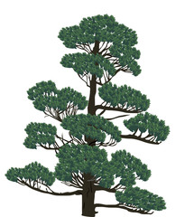 green pine isolated on white