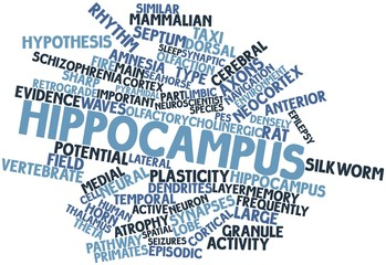 Word cloud for Hippocampus