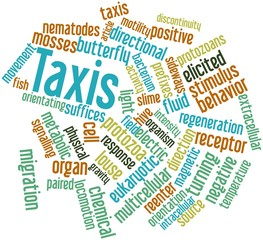 Word cloud for Taxis