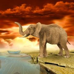 Elefante cerca del agua