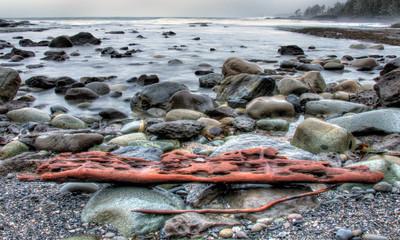 Fototapete - Weathered Drift Wood On Rocky Shore