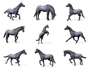 Set of blue roan horses - 3D render