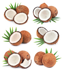 Collection of coconuts